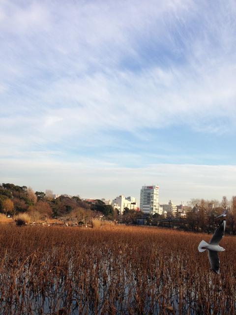 d_shinoba.jpg